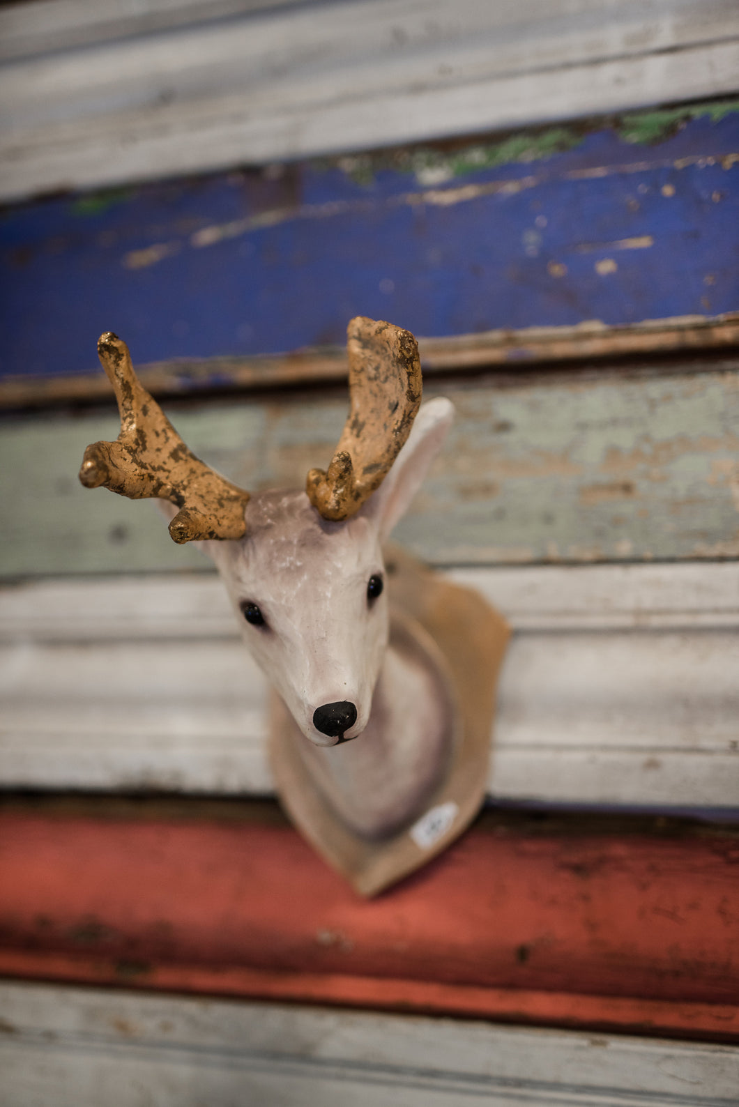 Small Deer Mount