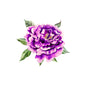 purple watercolor peony