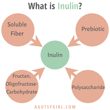 inulin pathways