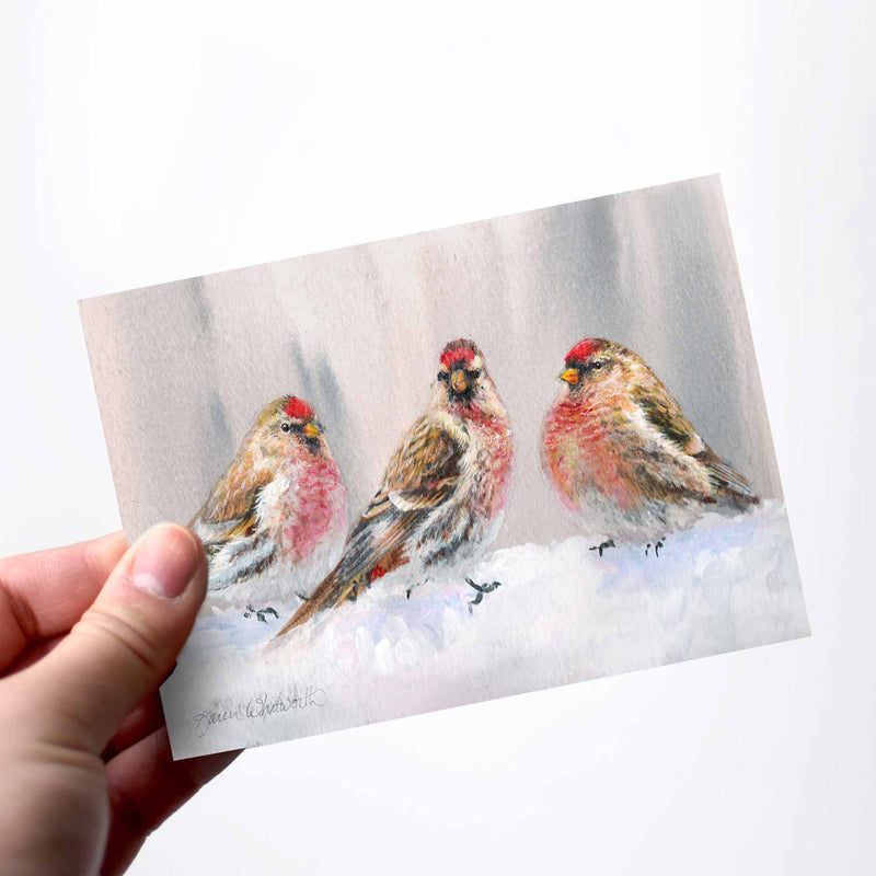 Alaska Red Polls in Winter greeting card with birds and snow by Alaska artist Karen Whitworth