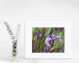 "8x10"" matted paper wall art print of Alaskan wild iris flower by artist Karen Whitworth"