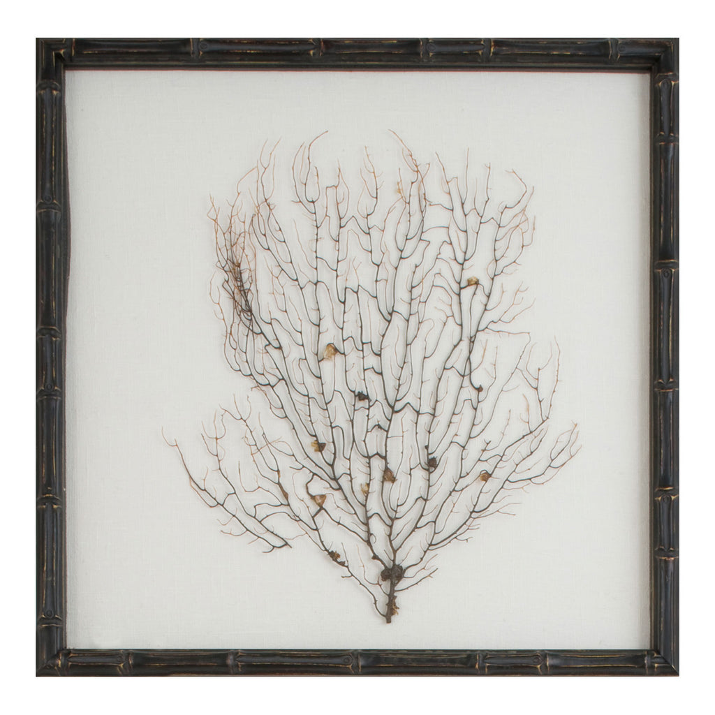 Mirror Image Home Island Natural Sea Fan Framed Wall Art