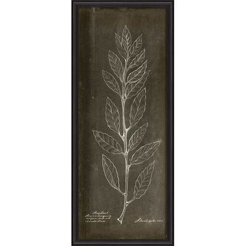 Bay Laurel I Framed Print
