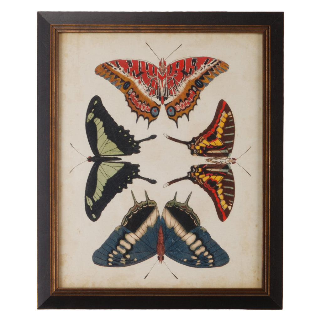 Chelsea House Display Of Butterflies II Framed Wall Art