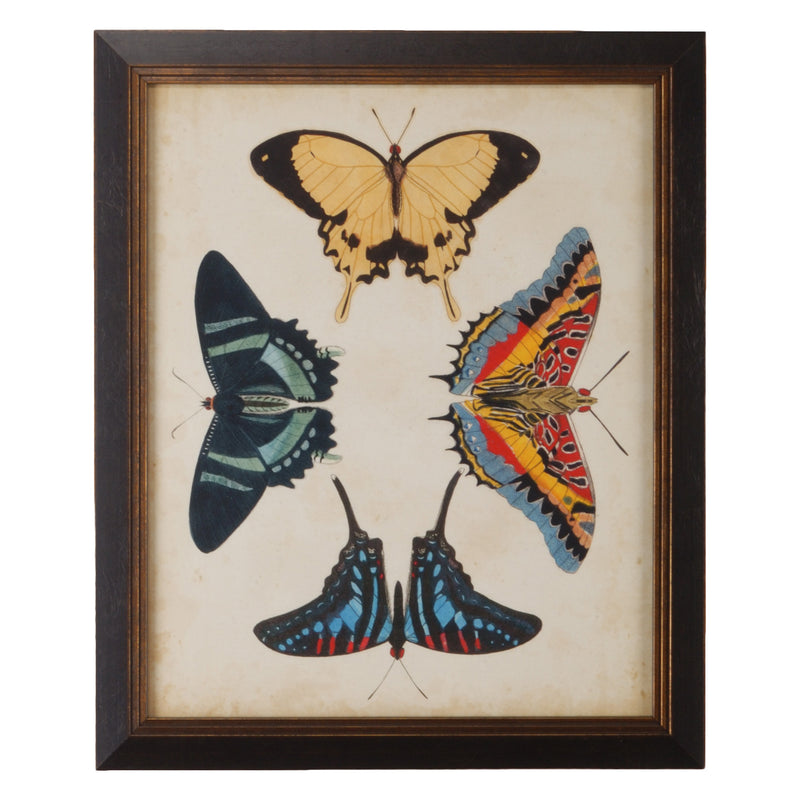 Chelsea House Display Of Butterflies III Framed Wall Art