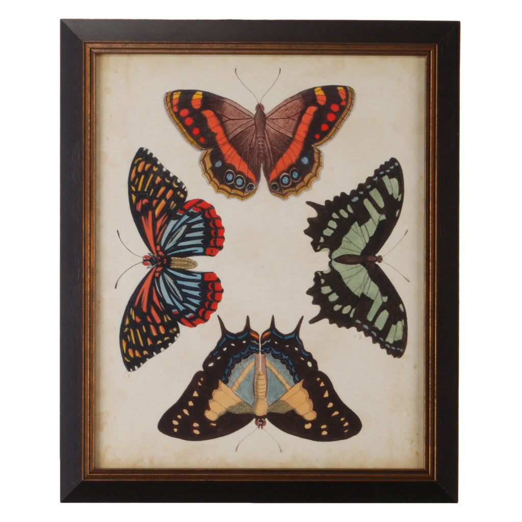 Chelsea House Display Of Butterflies IV Framed Wall Art