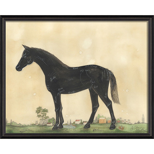 Anatomy of a Horse Framed Print
