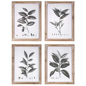 Botanical Wall Decor Set of 4