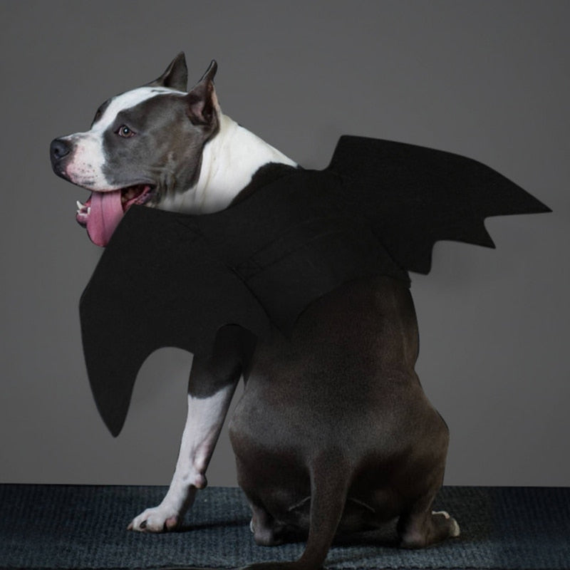 Pet Halloween Black Bat Wings Costume