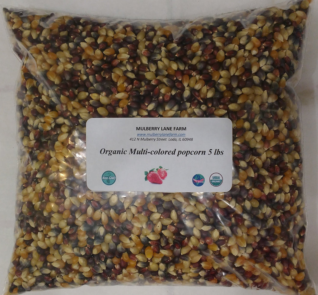 Multi-colored Popcorn Popping Corn 5 Pounds (Calico or Rainbow) Kernels, Whole Grain, USDA Certified Organic, Non-GMO Bulk - myorganicals