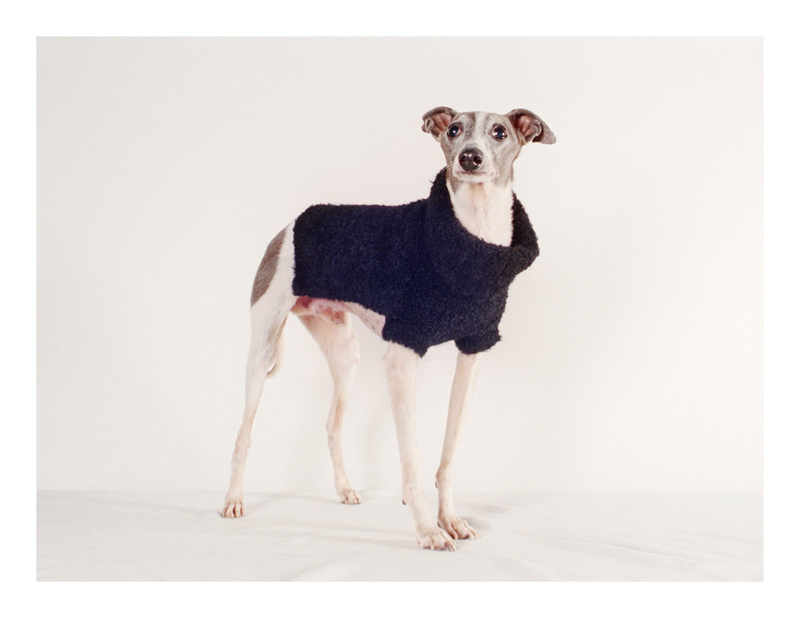Maria Stanley Dog Sweaters Alpaca boucle
