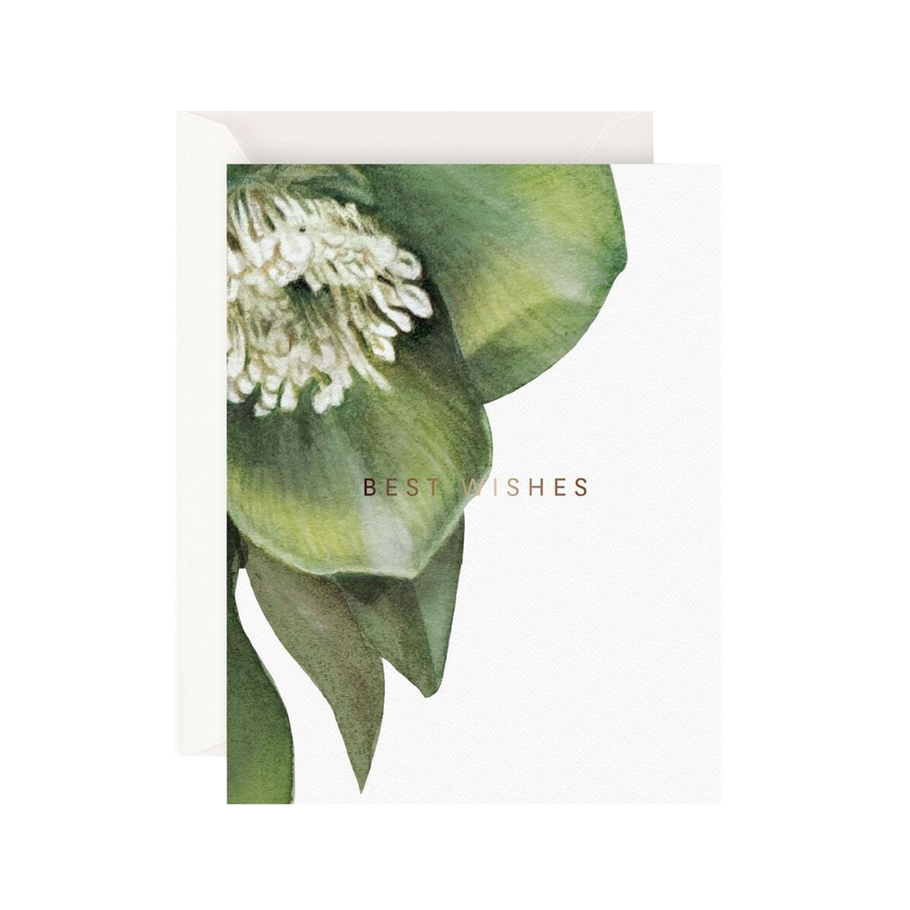 Father Rabbit Stationery Card Hellebore Best Wishes