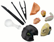 Simulated Frog Dissection Kit - EDU37307 | STEM Toy Store | STEMToyStore.com