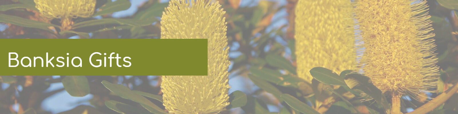 Banksia Gifts Australia products at Wellbeing Choices - AfterPay zipMoney