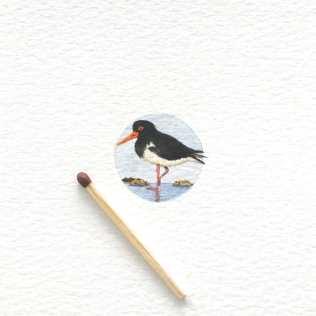 Oystercatcher - SOLD