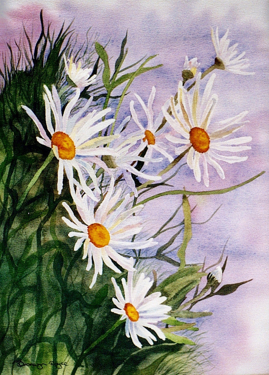 Daisies wild and free
