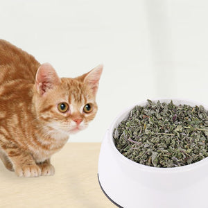 Top Quailty Natural Catnip