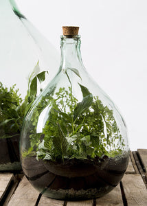 Terrarium Bottle Starter Set - 15L with tools