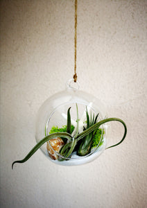 Air Plant Terrarium Kit - Seascape