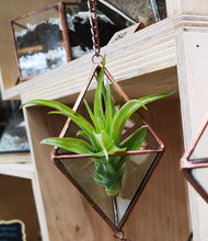 Load image into Gallery viewer, Air Plant Prism
