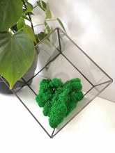 Load image into Gallery viewer, Reindeer Moss - Various Colours - 50 gm