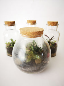 Terrarium in a Jar Kit