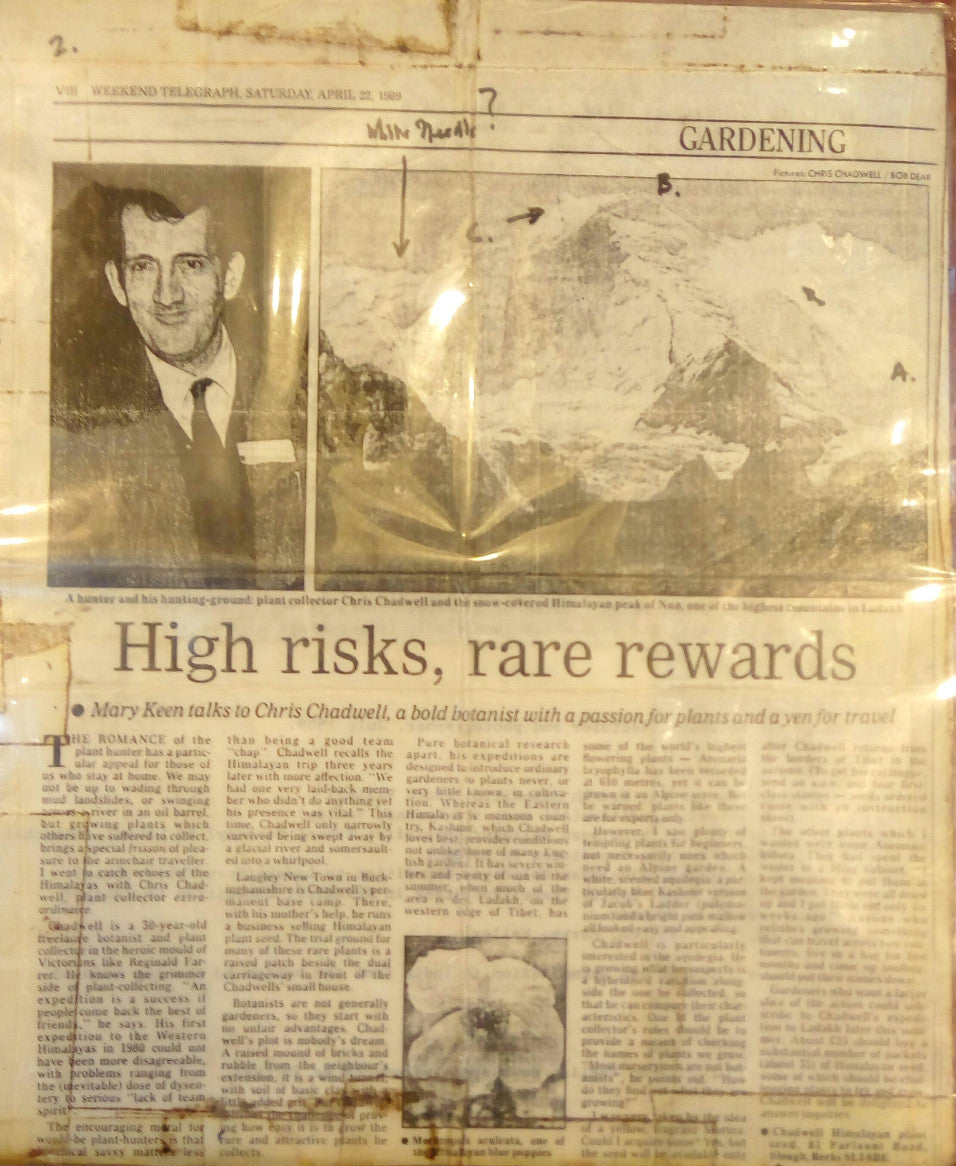 Newspaper cutting from the Weekend Telegraph, April 22 1989, of an interview with freelance English botanist Chris Chadwell
