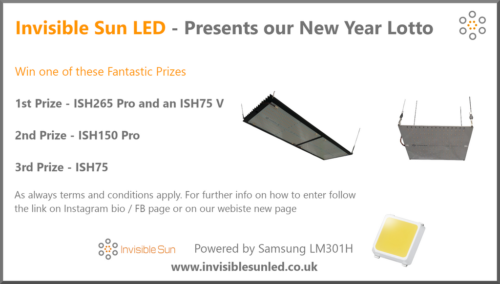 Invisible Sun New Year Lotto