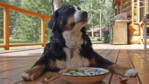 Human foods for dogs: Which foods are safe or harmful for dogs?