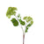 Lime green artificial viburnum flower stem