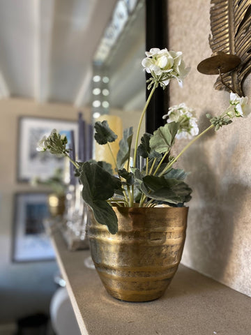 Showroom Accessories Plants Flowers Pictures