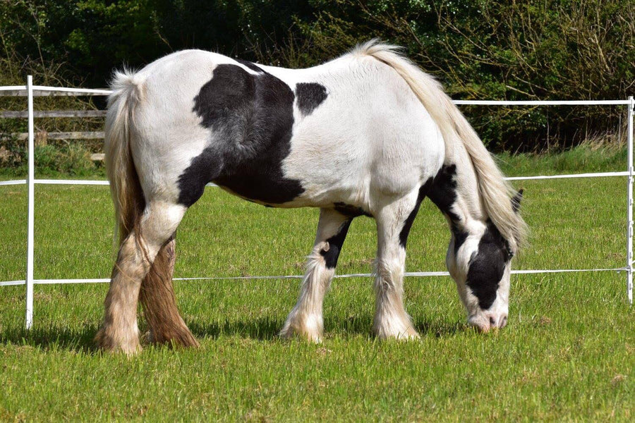 Horses and Spring Grass - How Will You Manage?