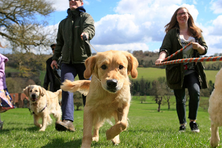 9 Of The Best Tips For Dog Walking Safety