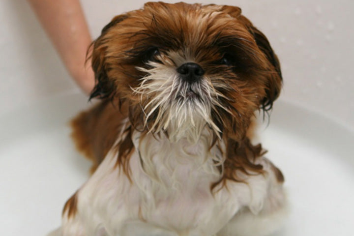 Simple Tricks To Make Your Dog Bathing Easy (Guest Post!)