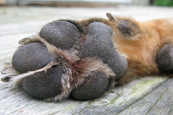 HELP! My Dog Has Rough Paw Pads... What can I do?