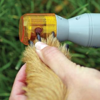 Dog Nail Grinder - Dog Paw Care Guide - MyPamperedPup