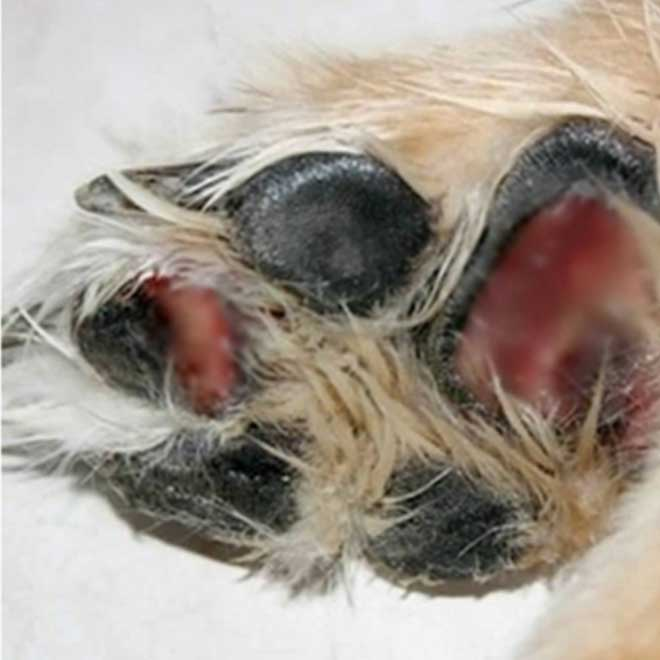 Dog Paw Winter Ice Burn - Winter Paw Balm - MyPamperedPup