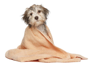 Dog Wrapped in Towel - Dog Shampoo - Dog Paw Balm - MyPamperedPup