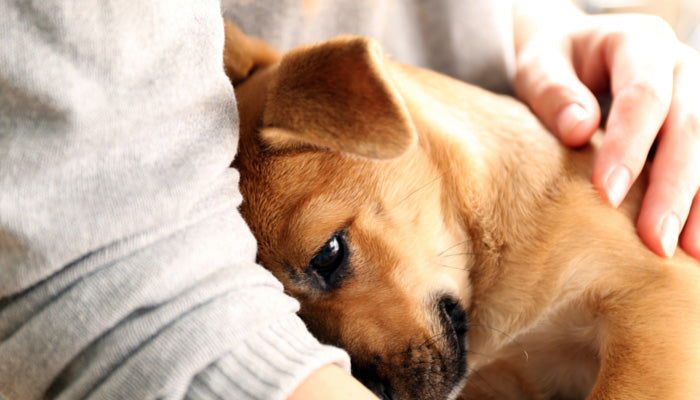 Puppy Cuddle - Signs of Stress in Dogs - MyPamperedPup