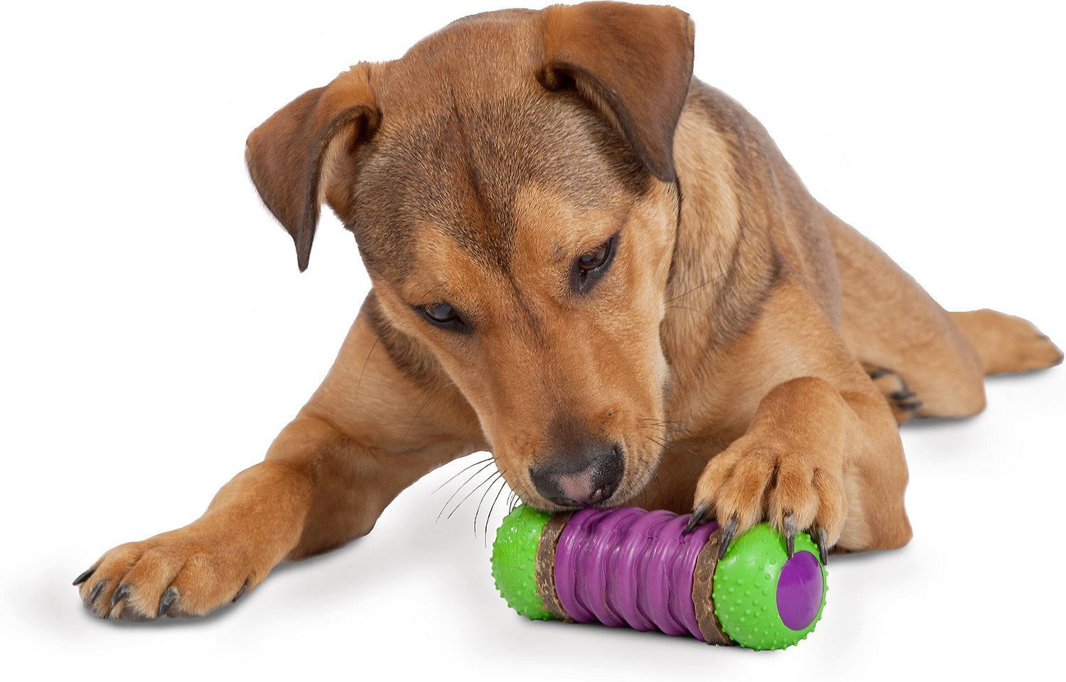 Treat Dog Toy - Signs of Stress in Dogs - MyPamperedPup