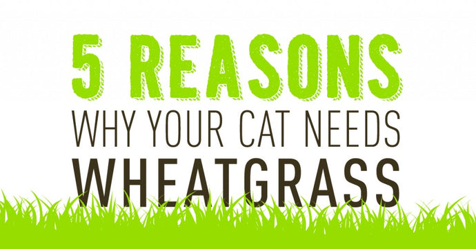 5 REASONS WHY YOUR CAT NEEDS GREENS