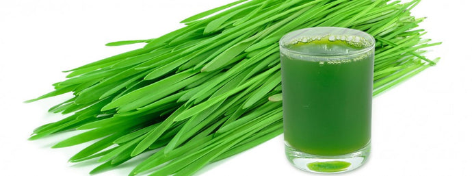YES, YOUR CAT NEEDS WHEATGRASS IN HER DIET, TOO!