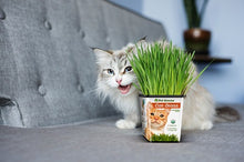 CAT GRASS AND CATNIP - 3 PACK