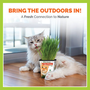 PET GREENS CAT GRASS - 3 PACK