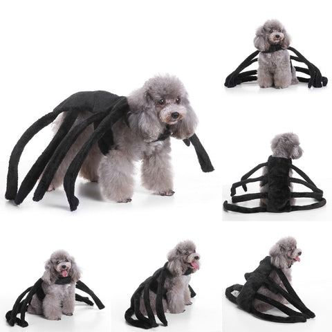 Funny Spider Dog Costume