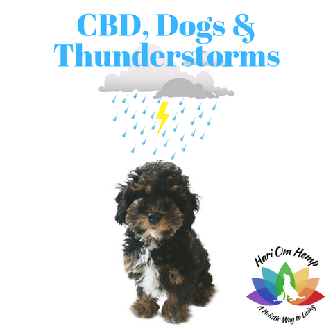 Dogs and Thunderstorms