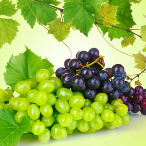GLORIOUS GRAPE
