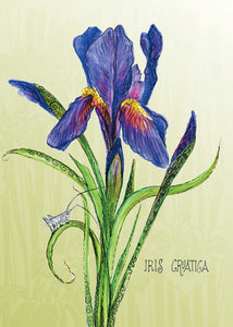 Iris Botanical Card