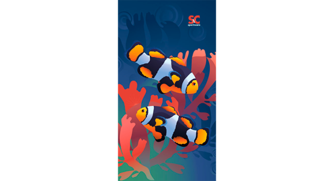 CLOWN FISH TOWEL