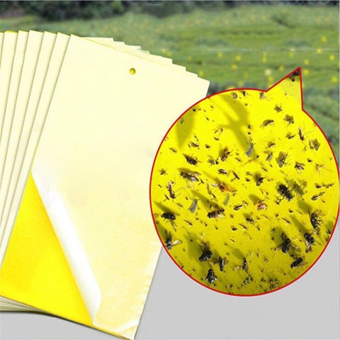 Strong Flies Bugs Catching Sticky Board 10pcs
